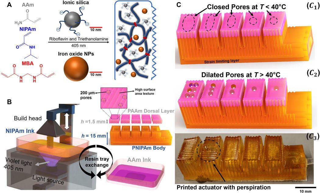 Science子刊:3D打印可自主排汗的水凝胶致动器
