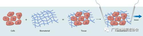 3D生物打印心脏组织的新进展和面对的挑战